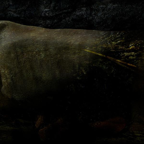 Subterranean †rhinoceros