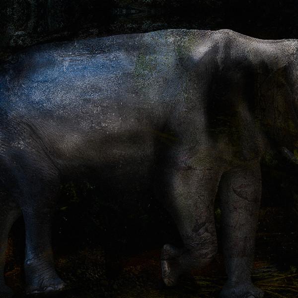 Subterranean †elephant