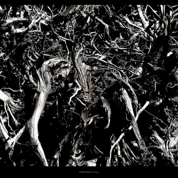 SPECIMEN †roots