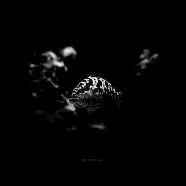 BLACK †fish
